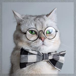 Scherzfragen Lustige Fragenrätsel F Kinder U Erwachsene
